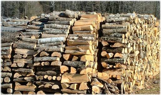 Незаконно добита дървесина е открита при съвместна проверка между служители от РУ-Велинград и ДСГ-Алабак
