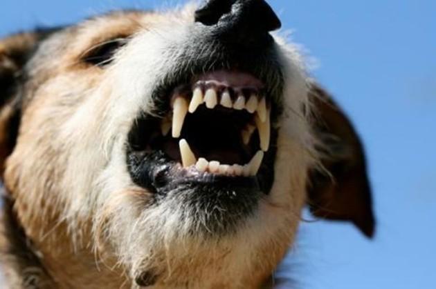 Община Велинград плаща 1200 лева на нахапан от бездомно куче