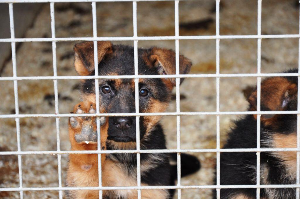 Обновена: vip-velingrad.com попита къде е приюта за кучета?