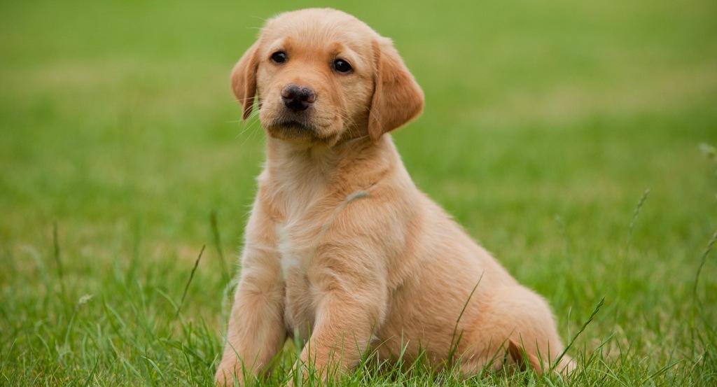 Общинското ръководство с апел към гражданите за безстопанствените кучета