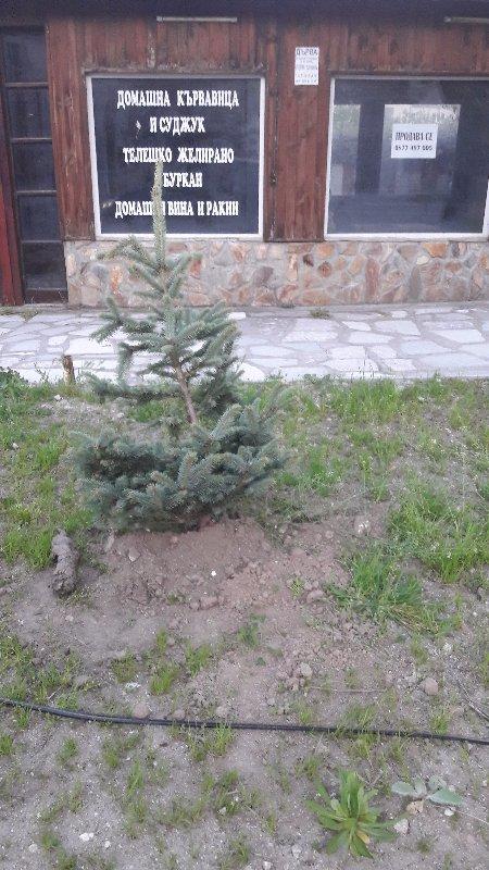 Стартира озеленяване във Велинград