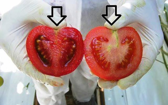 Как да разпознаваме генно-модифицираните храни (ГМО) в магазина?