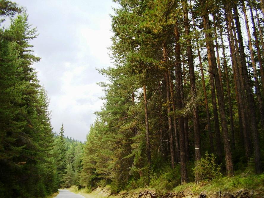 """Две длъжностни лица от Държавно горско стопанство """"Алабак"""" са задържани заради незаконна търговия с дървесина"""