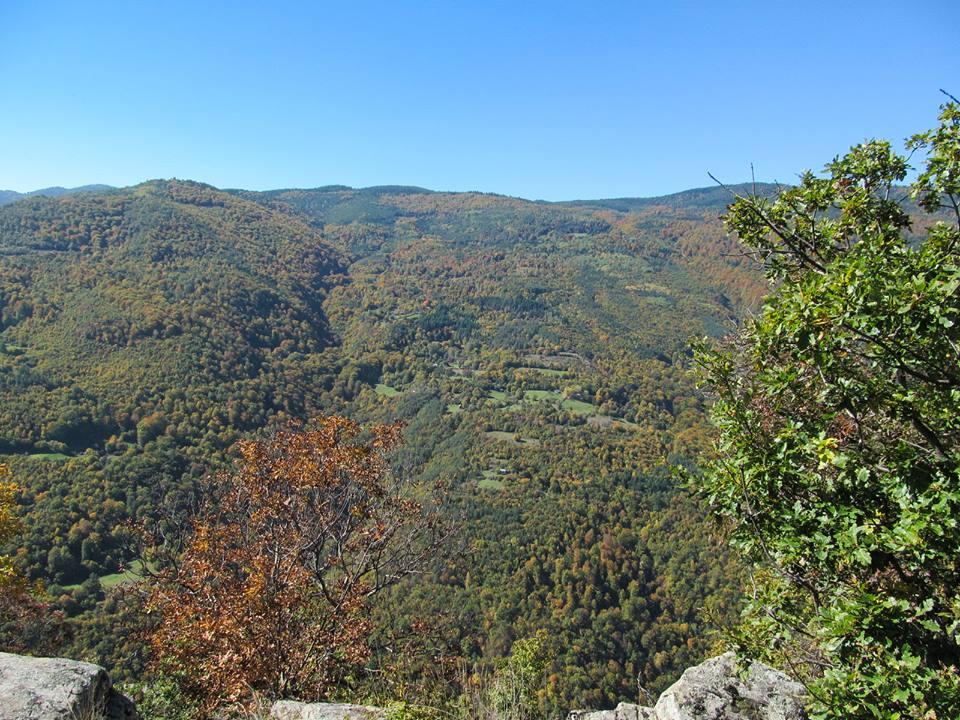 Поздравителен адрес- по случай Седмицата на гората от кмета Костадин Коев