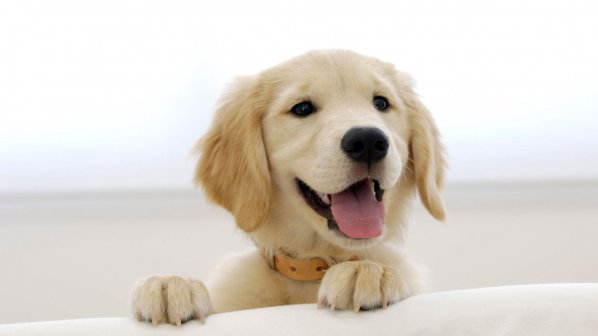 Защо не трябва да гушкаме кучето си?