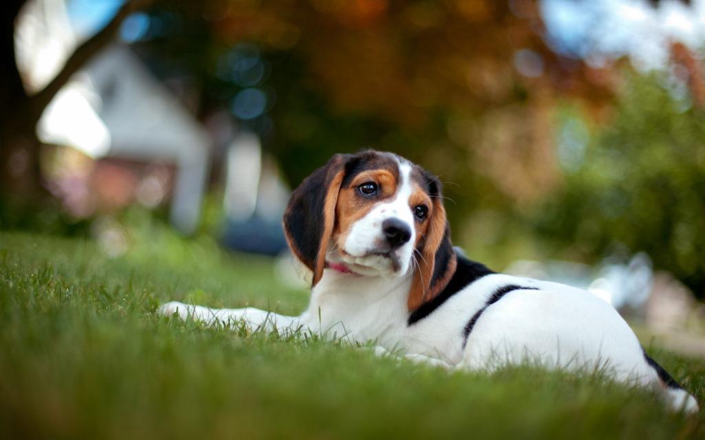 Важно: Безплатна кастрационна кампания за кучета и котки от 28 до 30 август във Велинград