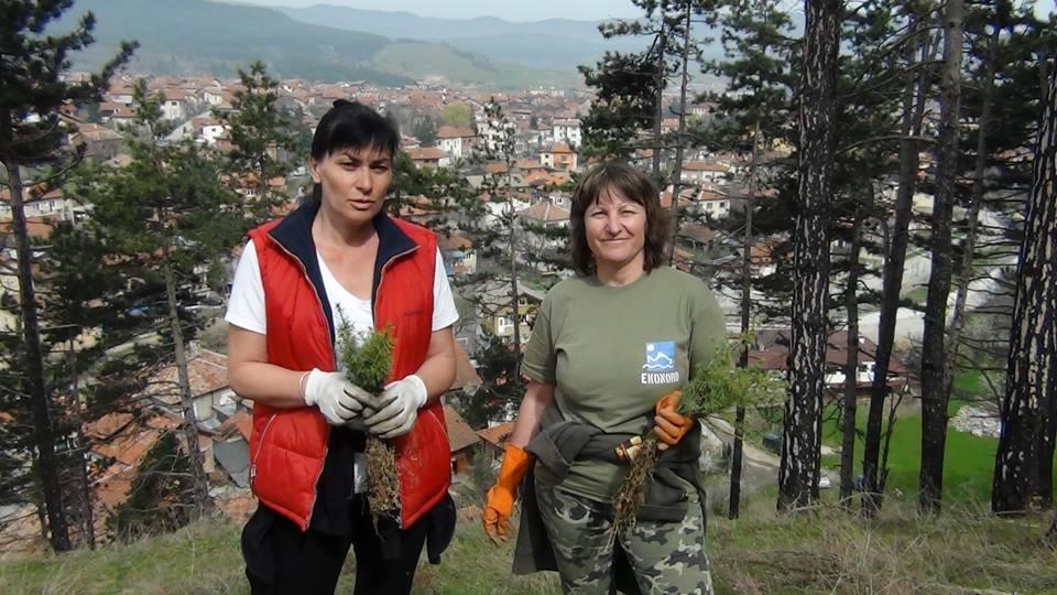 Залесяване на м.Бърдо в Ракитово