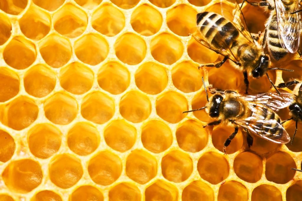 Около 10 лева е цената на буркан натурален пчелен мед, предлаган от производители-пчелари в региона