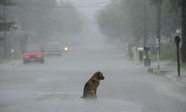 Нови мерки за решаване на проблема с бездомните кучета във Велинград