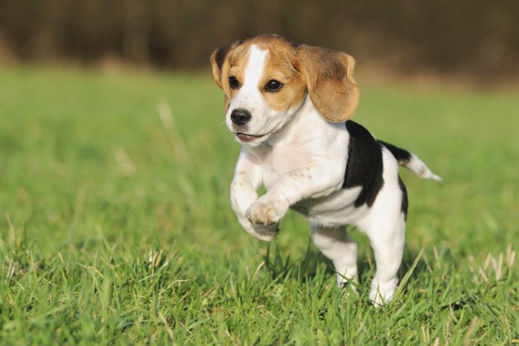 Кучетата са ангели, показват ни, че наистина съществува доброта
