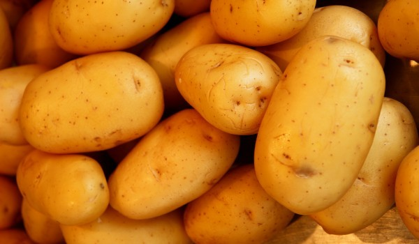 Около 0.50 лв. за килограм е изкупната цена на картофите във велинградското село Юндола