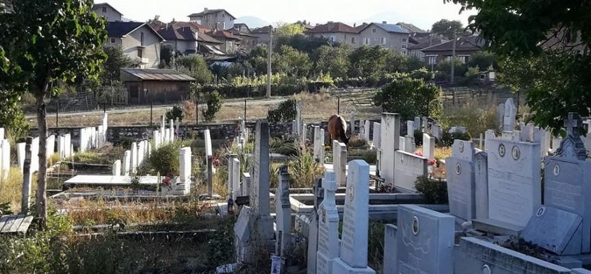 """Коне върлуват в гробището на кв. """"Каменица"""""""