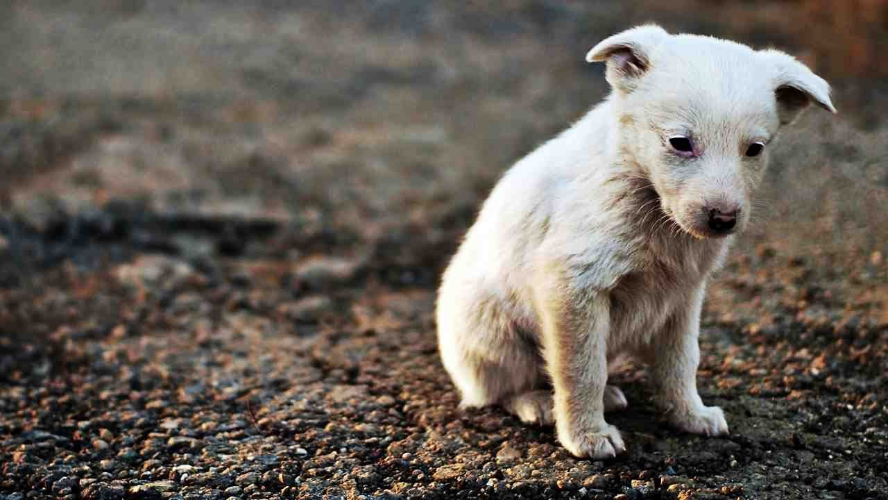 Хърватия защити със закон бездомните животни