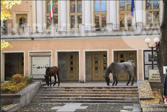Вашите сигнали: Коне по центъра на Велинград