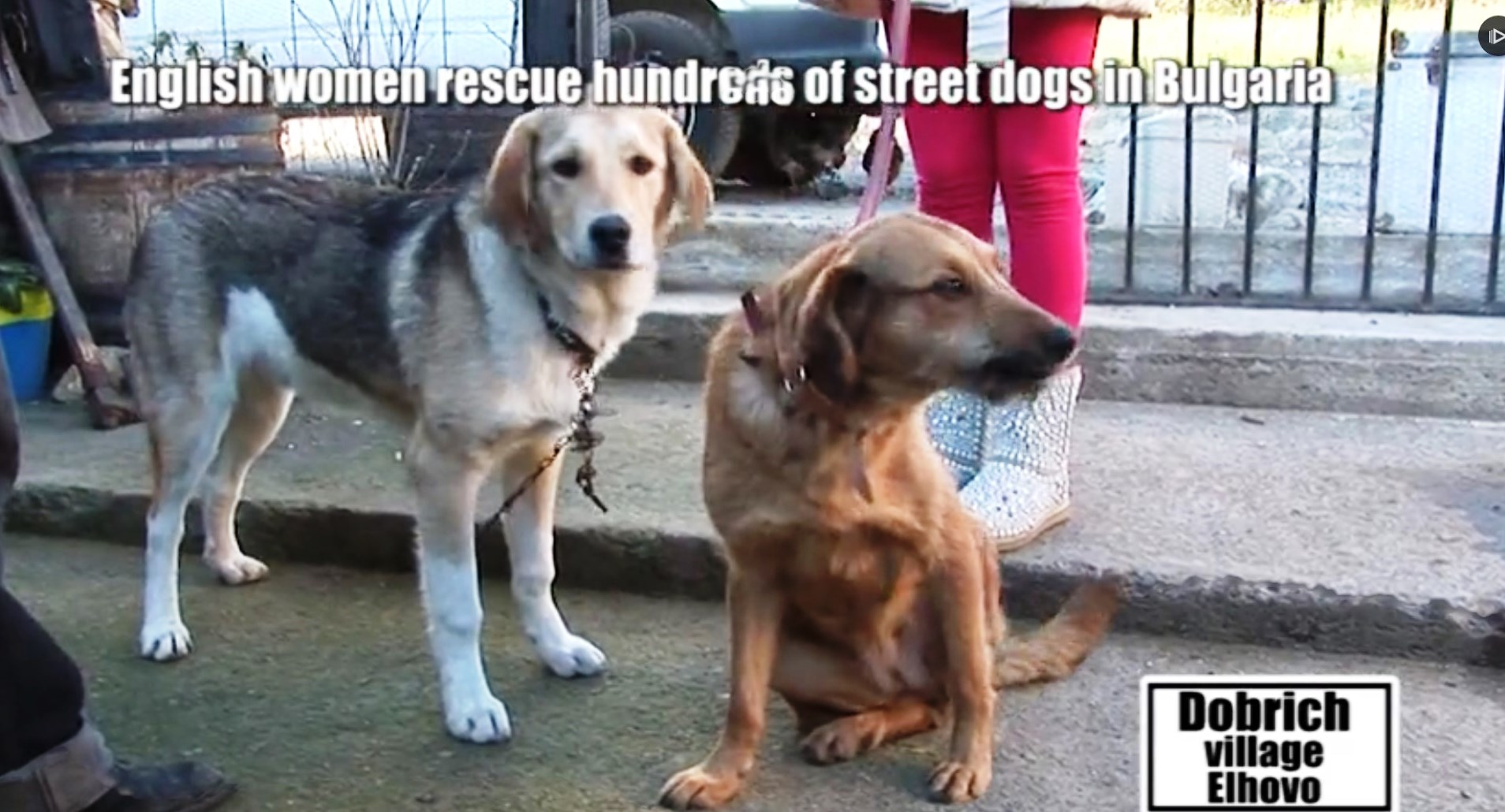РЕСПЕКТ: Англичанки спасяват и намират осиновители за стотици български улични кучета