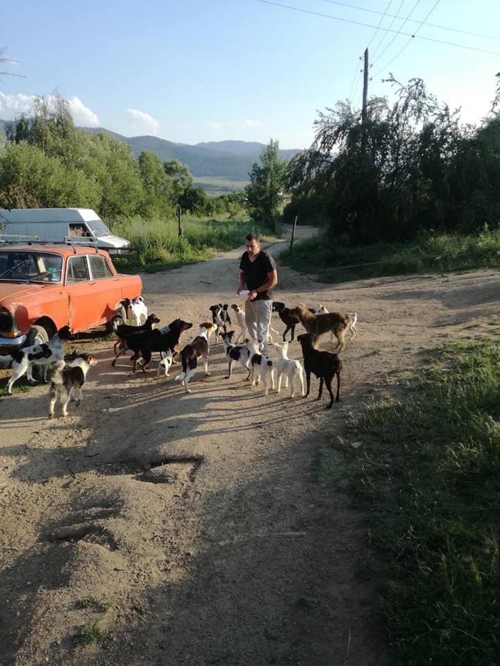 Човек на 70 години се грижи за 40 изоставени кучета