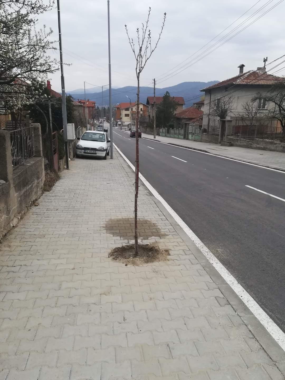 Започва засаждането на нови декоративни дръвчета
