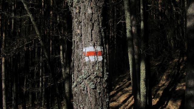 Водач на каруца е заловен с незаконно добита дървесина