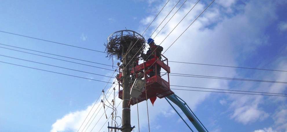 През 2018 г. Електроразпределение Юг монтира 166 нови платформи за щъркелови гнезда по стълбове от електроразпределителната мрежа