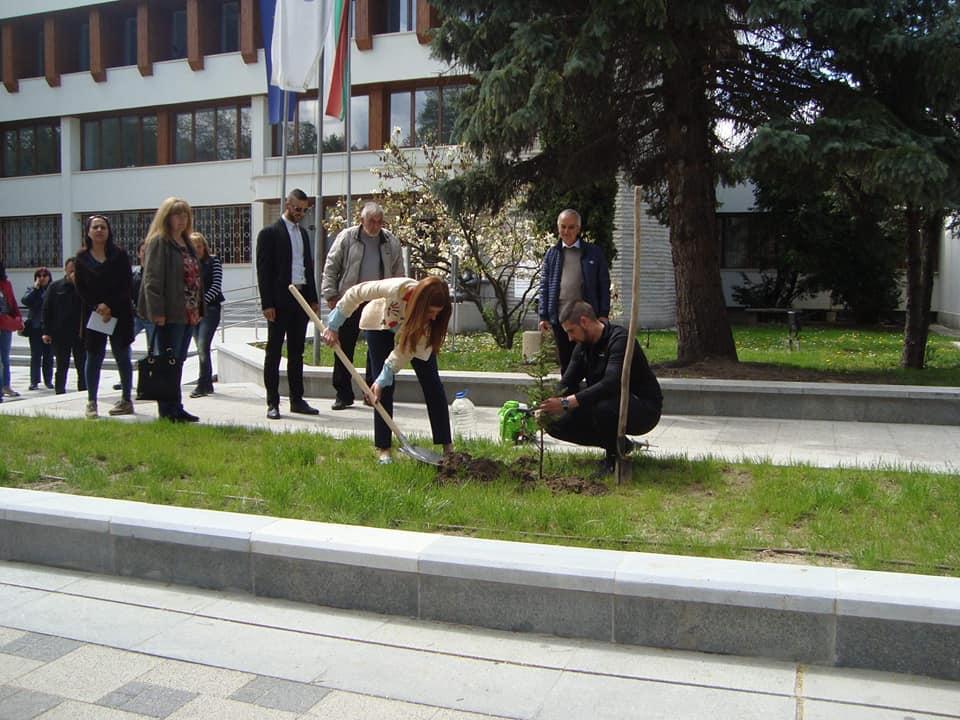 Служители на общинска администрация засадиха 200 дръвчета
