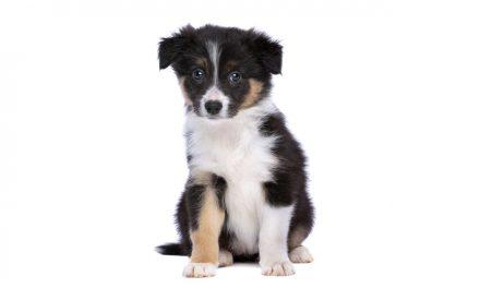 Отново отровени кучета в квартал Каменица и в района на центъра на спа столицата Велинград