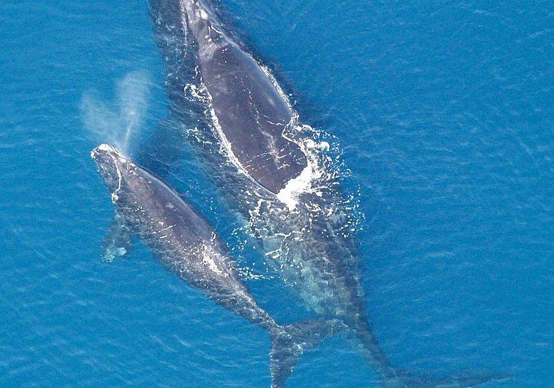 На 19 февруари еколозите отбелязват Световния ден на китовете и други морски бозайници