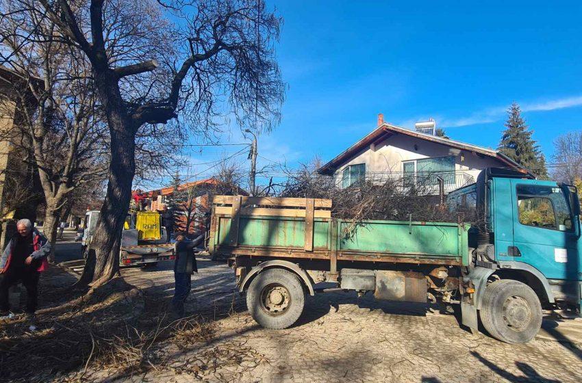 Кастрят сухи клони на дърветата по улиците в гр. Ракитово