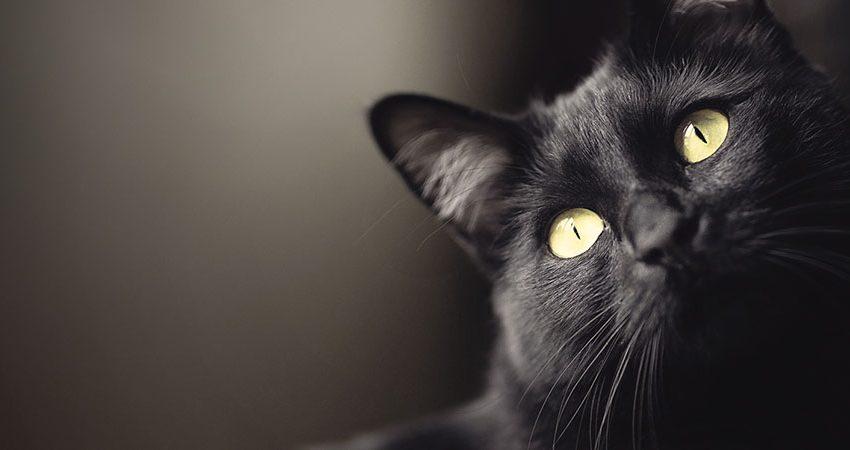 8 август – Международен ден на котките